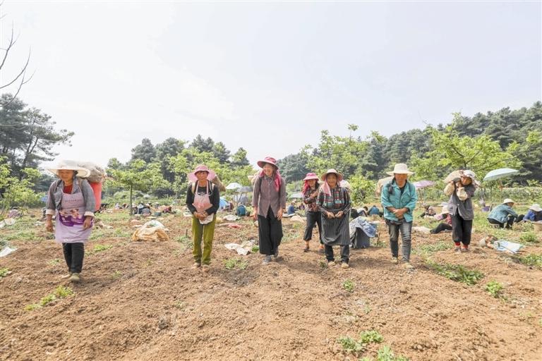 赫章:林下经济助力乡村振兴